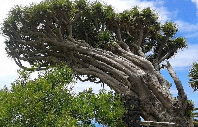 La Palma Sun Nudist - Environment - 17