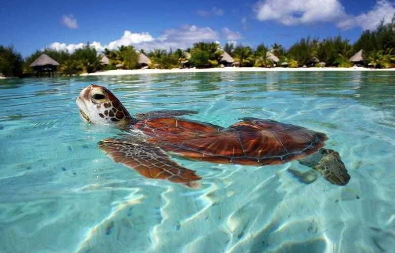 Le Meridien Bora Bora - Hotel - 61