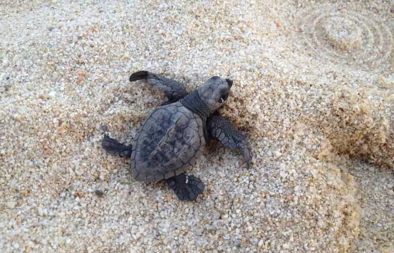 La Isla Huatulco - Beach - 14