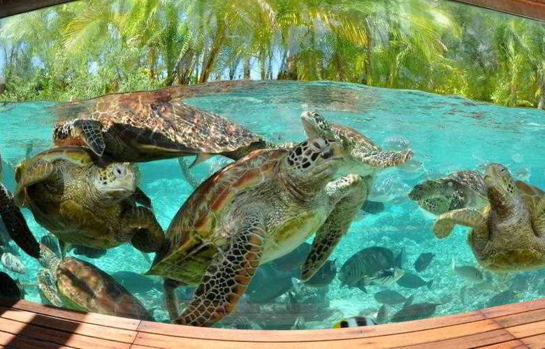 Le Meridien Bora Bora - Hotel - 35